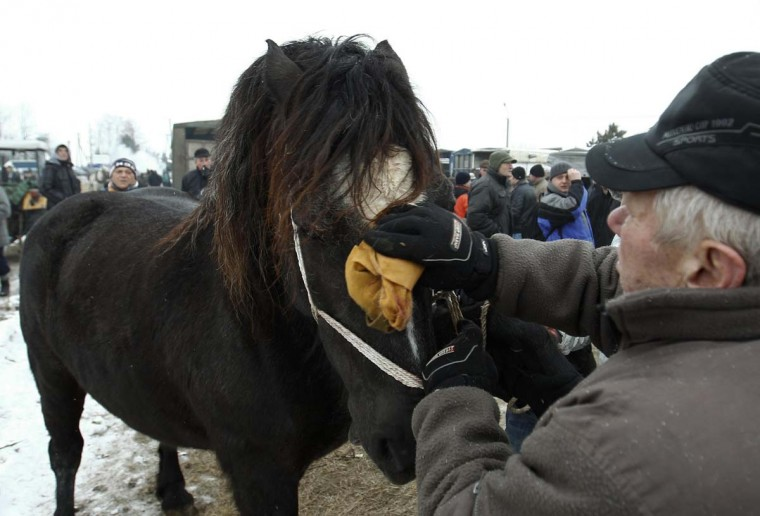 A breeder brushes his horse at Skaryszew horse fair February 18, 2013. (Peter Andrews/Reuters)