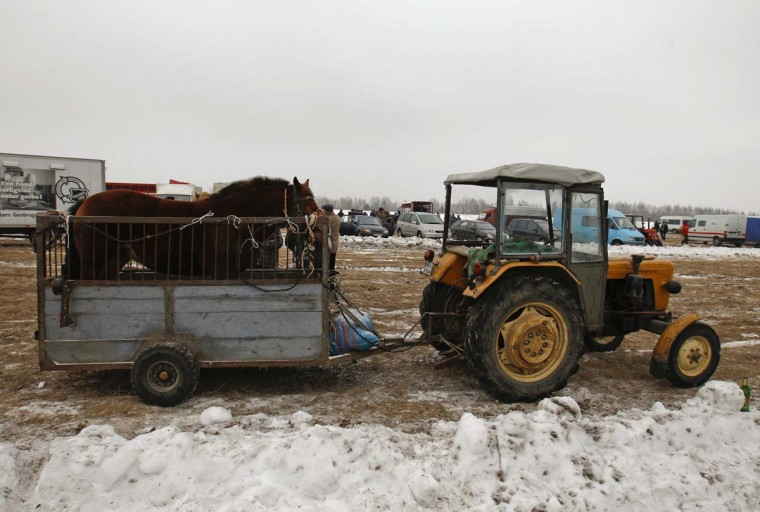 A horse is standing on a trailer behind a tractor after being sold at Skaryszew horse fair February 18, 2013. (Peter Andrews/Reuters)