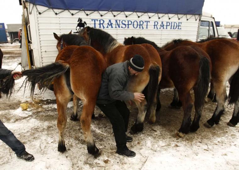 A breeder checks horse's hoof at Skaryszew horse fair February 18, 2013. (Peter Andrews/Reuters)