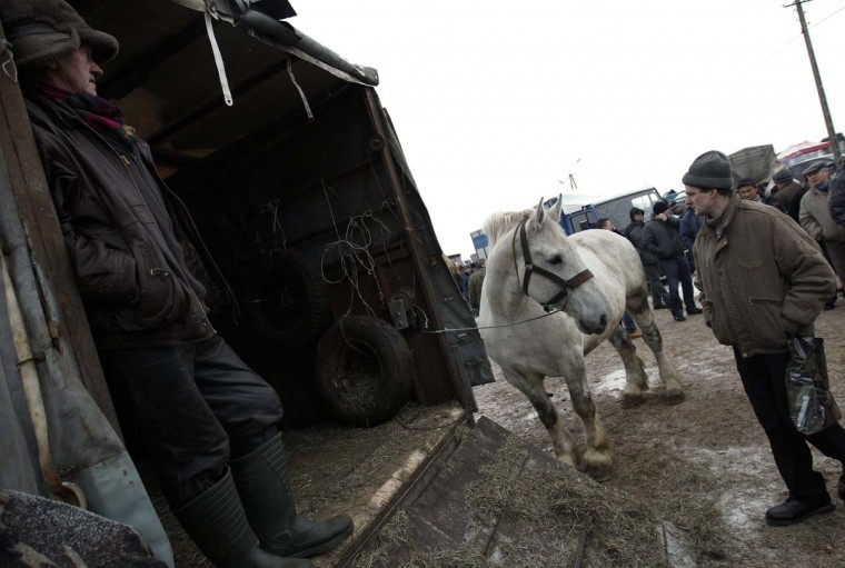 A breeder presents his horse at Skaryszew horse fair February 18, 2013. (Peter Andrews/Reuters)