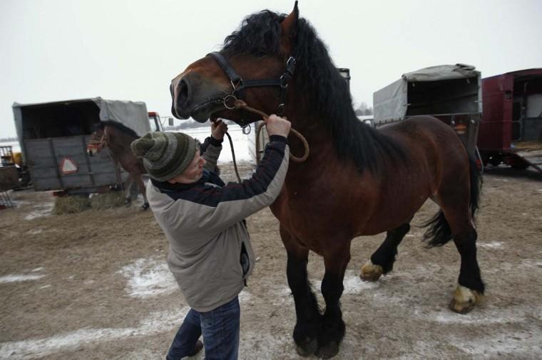 A breeder presents his horse at Skaryszew horse fair February 18, 2013. (Peter Andrews/Reuters)