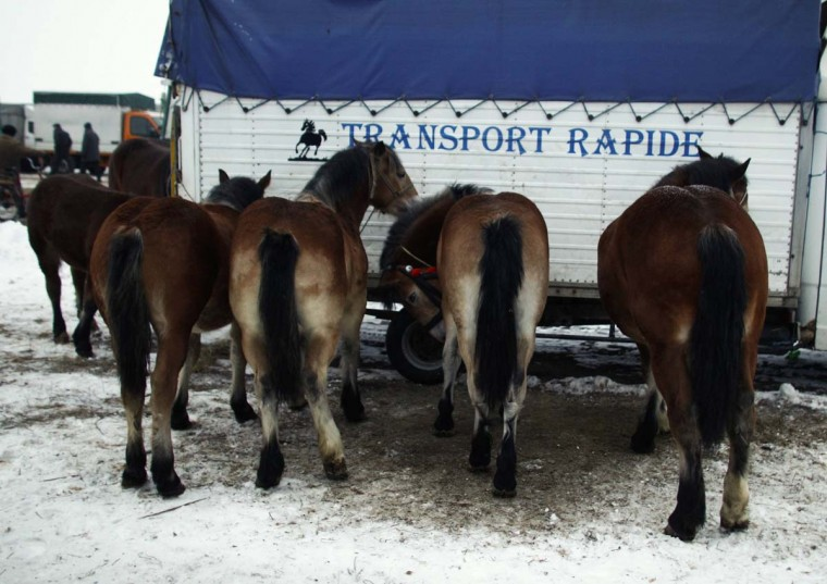 Horses are being shown at Skaryszew horse fair February 18, 2013. (Peter Andrews/Reuters)
