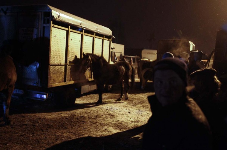 Breeders present their horses during early morning hours at Skaryszew horse fair February 18, 2013. (Peter Andrews/Reuters)