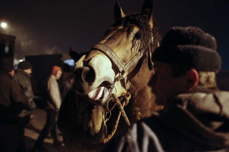 A breeder presents his horse during early morning hours at Skaryszew horse fair February 18, 2013. (Peter Andrews/Reuters)