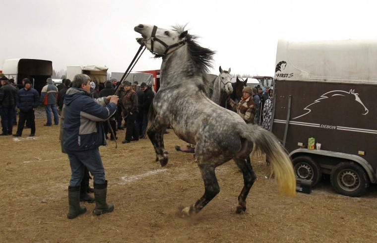 People are watching as a breeder handles his horse at Skaryszew horse fair February 18, 2013. (Peter Andrews/Reuters)