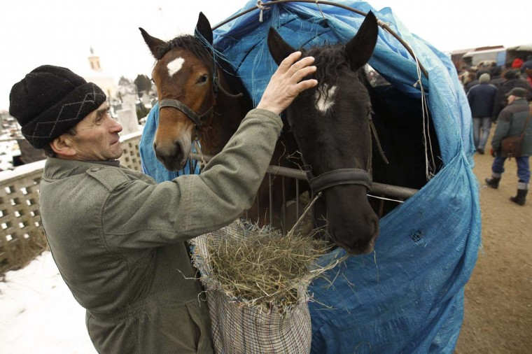 A breeder feeds his horses at Skaryszew horse fair February 18, 2013. (Peter Andrews/Reuters)