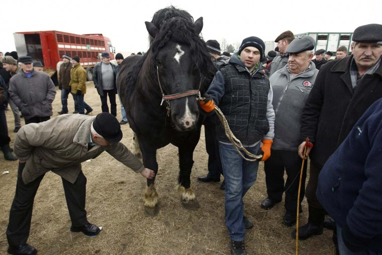 A man checks horse's legs as a breeder presents his horse at Skaryszew horse fair February 18, 2013. (Peter Andrews/Reuters)