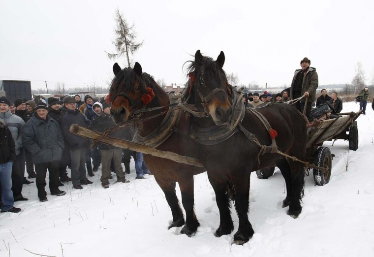 A farmer presents his horses at Skaryszew horse fair February 18, 2013. (Peter Andrews/Reuters)