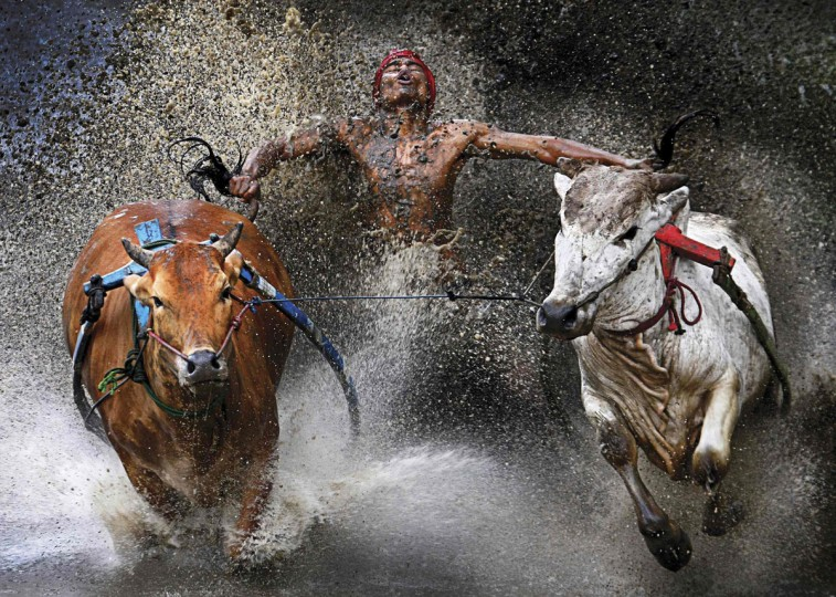 #6: Chen Wei Seng of Malaysia has won the first prize in the Sports Action Single category of the World Press Photo Contest 2013 with this picture of a jockey showing relief and joy at the end of a dangerous run across rice fields during the Pacu Jawi bull race in Batu Sangkar, West Sumatra, taken on February 12, 2012 and distributed by the World Press Photo Foundation February 15, 2013. (Chen Wei Seng/World Press Photo/Handout/Reuters)