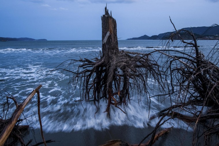 #5: Daniel Berehulak of Australia, a photographer working for Getty Images, has won the third prize in the General News Stories category of the World Press Photo Contest 2013 with the series 'Japan after the wave.' The picture shows pine trees uprooted during the tsunami laying strewn over the beach in Rikuzentakata, taken on March 7, 2012 and distributed by the World Press Photo Foundation February 15, 2013. (Daniel Berehulak/Getty Images/World Press Photo/Handout/Reuters)