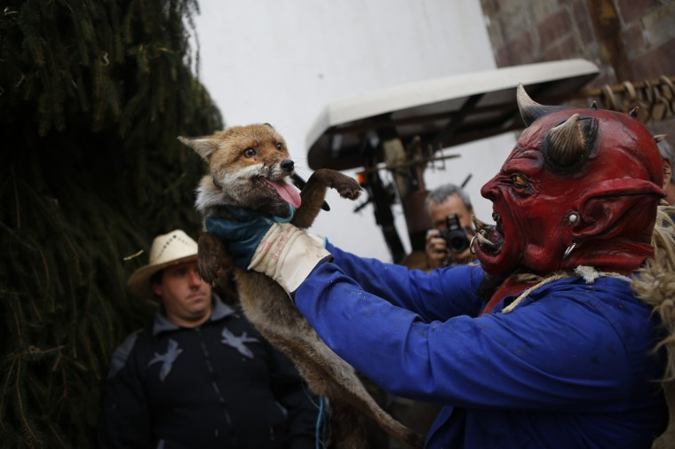 A reveller wearing a demonic mask lifts a fox in the air as he takes part in carnival celebrations in Zubieta January 29, 2013. Every year, villagers from Ituren parade to the neighboring town of Zubieta to join this traditional carnival, which is considered a festival to welcome the spring after a tough winter in the deep valleys of the northern Navarra region. (Susana Vera/Reuters)