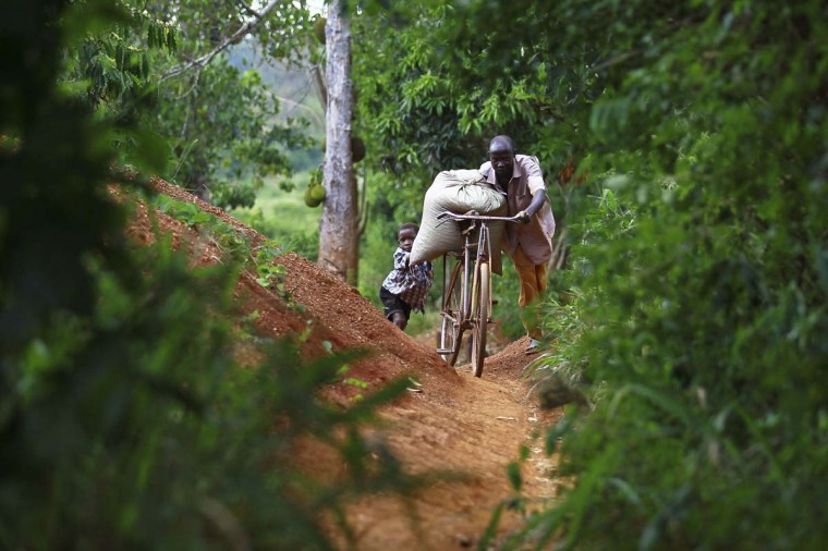 A gold miner uses a bicycle to transport a sack of sandy soil from a small scale mine in Bugiri, 348 km (216 miles) east of Kampala, Uganda's capital February 5, 2013. (Edward Echwalu/Reuters)