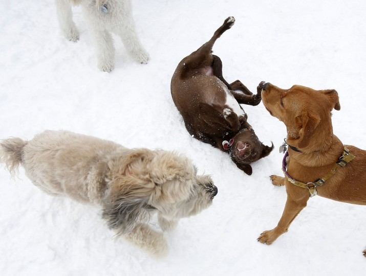 Dogs play in the snow in Central Park in New York, February 9, 2013. A blizzard pummeled the Northeastern United States, killing at least one person, leaving hundreds of thousands without power and disrupting thousands of flights, media and officials said. (Carlo Allegri/Reuters)