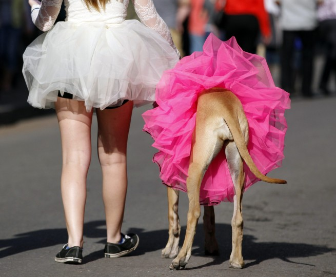 A dog owner walks her dog to The Krewe of Barkus parade in the French Quarter during the Mardi Gras 2013 celebration in New Orleans, January 27, 2013. (Jeff Haynes/Reuters)