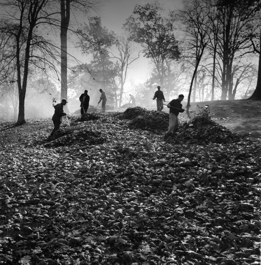 August 24, 1964 - City workers pile up leaves in Druid Hill Park to be picked up by a truck for burning. Richard Stacks/Baltimore Sun