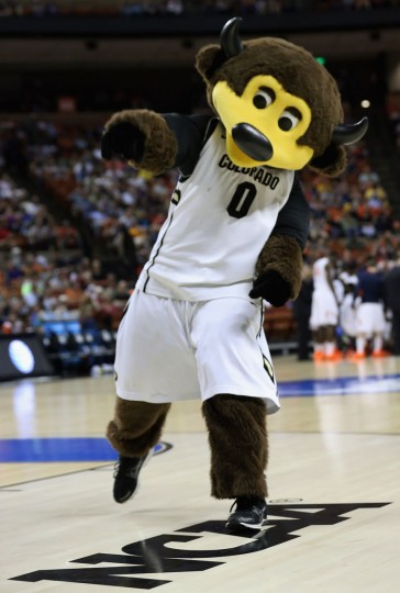 The Colorado Buffaloes mascot Chip performs during the second round of the 2013 NCAA Men's Basketball Tournament at The Frank Erwin Center on March 22, 2013 in Austin, Texas.  (Photo by Stephen Dunn/Getty Images)