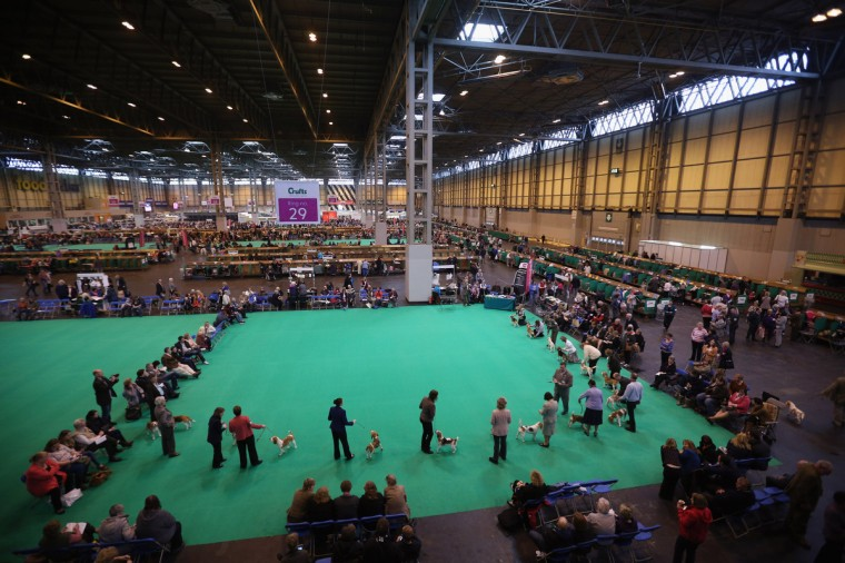 Owners show their dogs on the first day of Crufts dog show at the NEC on March 7, 2013 in Birmingham, England. The four-day show features over 25,000 dogs, with competitors travelling from 41 countries to take part. Crufts, which was first held in1891, sees thousands of dogs vie for the coveted title of 'Best in Show'. (Oli Scarff/Getty Images)