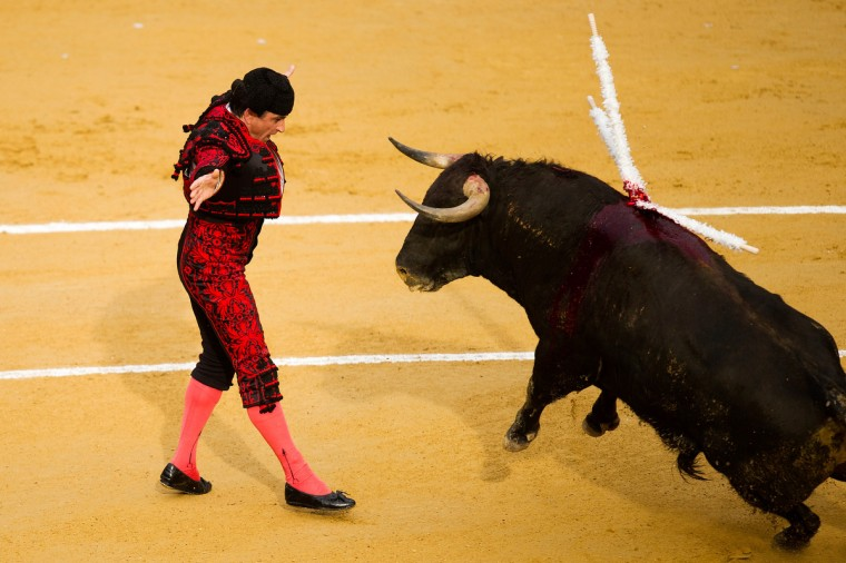 A bullfighter performs during a bullfight as part of the Las Fallas Festival on March 19, 2013 in Valencia, Spain. (David Ramos/Getty Images)