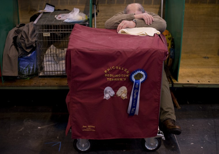 An owner rests during the first day of the Crufts dog show in Birmingham, in central England. (Ben Stansall/Getty Images)
