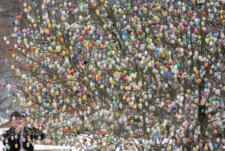 Volker Kraft decorates his apple tree with easter eggs in Saalfeld, Germany. Kraft decorates his tree with easter eggs every year. (Michael Reichel/Getty Images)