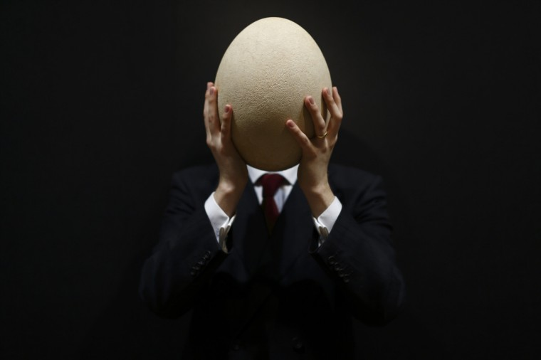 An employee of Christie's auction house poses with a complete sub-fossilized Elephant Bird egg in London during a press preview of their April 'Travel, Science and Natural History' sale. This pre-17th century egg of the extinct Elephant Bird, the largest bird ever to have lived, is approximately 100 times larger than the average chicken's egg and is estimated to fetch 20,000 - 30,000 GBP when it goes on sale on April 24, 2013. (Justin Tallis/Getty Images)