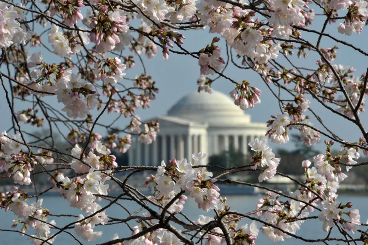 March 17, 2012: Jefferson Memorial is seen trough cherry blossom trees adjacent to the Tidal Basin on the National Mall in Washington, DC. (Mladan Antonov/AFP/Getty Images)