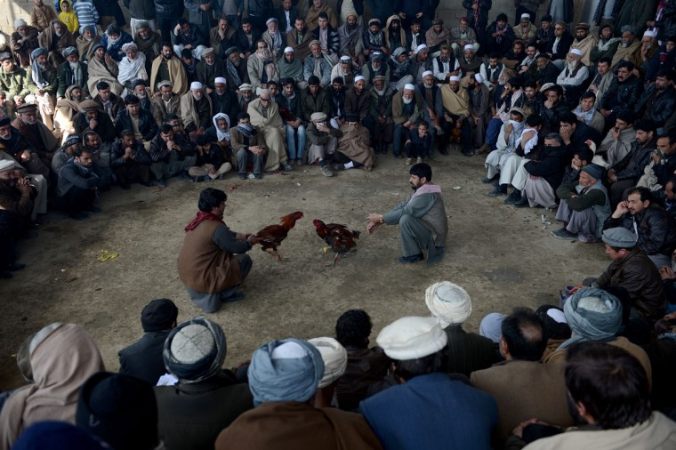 Afghan men watch a cock-fighting tournament in Kabul on March 1, 2013. (Shah Marai/AFP/Getty Images)