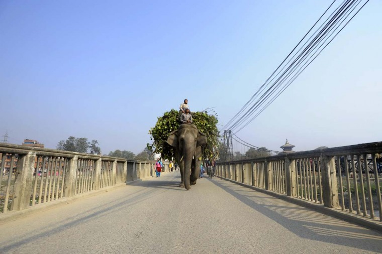 A Nepalese mahout leads his elephant during a general strike called by the Communist Party of Nepal-Maoist in Kathmandu on March 6, 2013. The nationwide strike was organized by a hardline breakaway faction of the country's ruling Maoists in protest over an attempt by the mainstream political parties protest against an agreement to allow the Chief Justice Khil Raj Regmi of the Supreme Court to head the new administration to oversee the vote in May or June. (Prakash Mathema/AFP/Getty Images)