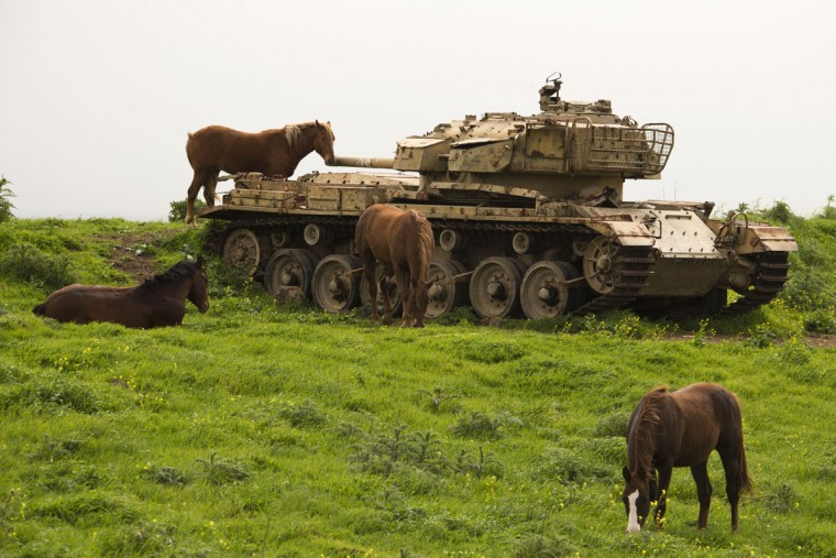 Horses roam near a former Israeli tank in a field along the border between Syria and Israel, in the Golan Heights on March 8, 2013. (Jack Guez/AFP/Getty Images)