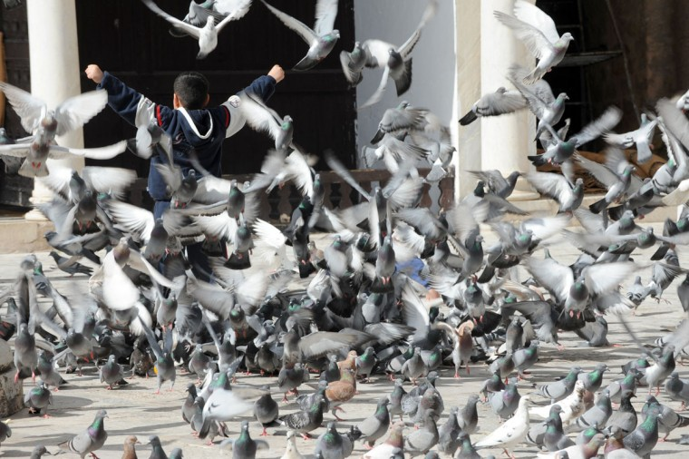 A Tunisian scatters pigeons on March 21, 2013 in the courtyard of the Tunisian capital's historic Zituna mosque in the heart of Tunis' old quarter. Two years after the Arab Spring uprisings, Tunisia is trying to win back holidaymakers in a lifeblood sector for the North African country which is gripped by renewed political crisis. (Fethi Belaid/AFP/Getty Images)