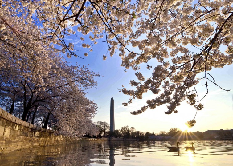 March 19, 2013: The National Cherry Blossom Festival and Parade in Washington. (Buddy Secor/Courtesy of the National Cherry Blossom Festival)