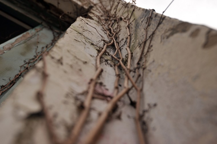 Vines creep up an outside wall of a building on the Henryton complex. Originally built in 1922 as a sanitarium for African-Americans with tuberculosis and employed four decades later as a facility for developmentally disabled adults, it closed in 1985. The abandoned buildings are slated for demolition, but no date is set. (Kim Hairston/Baltimore Sun)