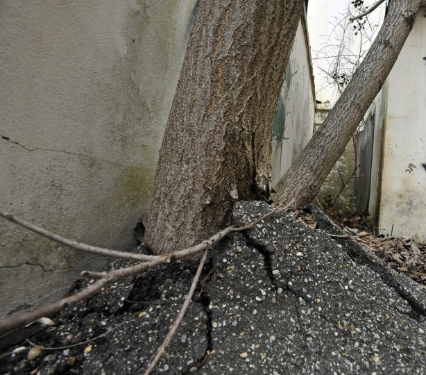 A tree pushes its way through asphalt on the side of the main building in the Henryton complex. Years after Maryland and most states largely abandoned institutional psychiatric care in favor of community-oriented treatment, some former hospitals remain vacant as officials puzzle over what to do with them. (Kim Hairston/Baltimore Sun)