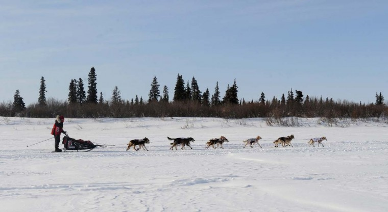 Aliy Zirkle drives her dog team up the Fish River outside White Mountain, Alaska, on Tuesday, March 12, 2013, during the Iditarod Trail Sled Dog Race. (Bill Roth/Anchorage Daily News/MCT)
