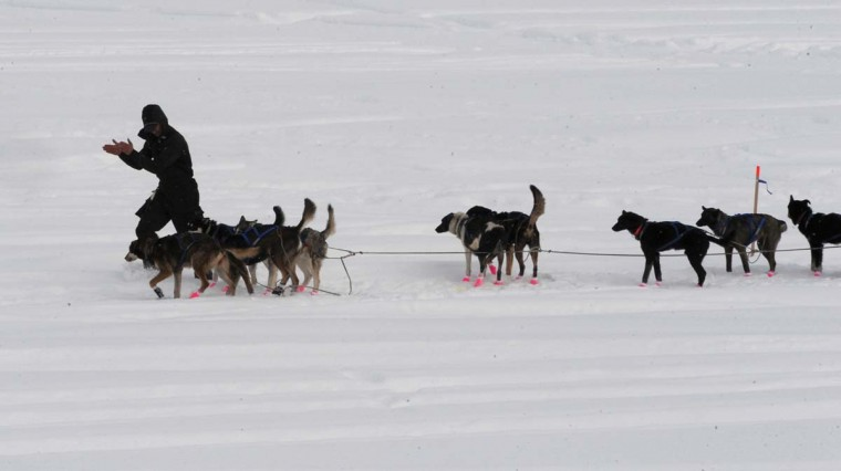 Iditarod musher Matt Failor lines out his dog team while leaving the McGrath, Alaska, checkpoint on Wednesday, March 6, 2013. (Bill Roth/Anchorage Daily News/MCT)