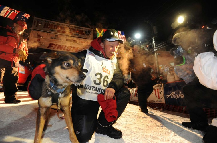 Mitch Seavey became a two-time Iditarod champion when he drove his dog team under the burled arch in Nome, Alaska on Tuesday evening, March 12, 2013. Seavey, 53, had won the race previously in 2004. (Bill Roth/Anchorage Daily News/MCT)