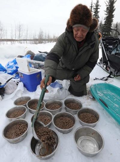 Veteran Iditarod musher Rudy Demoski prepares food for his dog team at the McGrath, Alaska, checkpoint on Wednesday, March 6, 2013. (Bill Roth/Anchorage Daily News/MCT) O