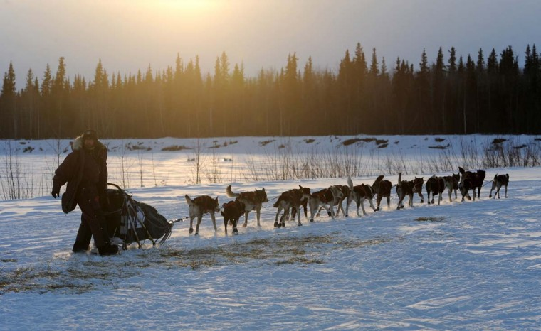 Veteran Iditarod musher Robert Bundtzen drives his team away from the Athabaskan village of Nikolai, Alaska, on Tuesday, March 5, 2013. (Bill Roth/Anchorage Daily News/MCT)