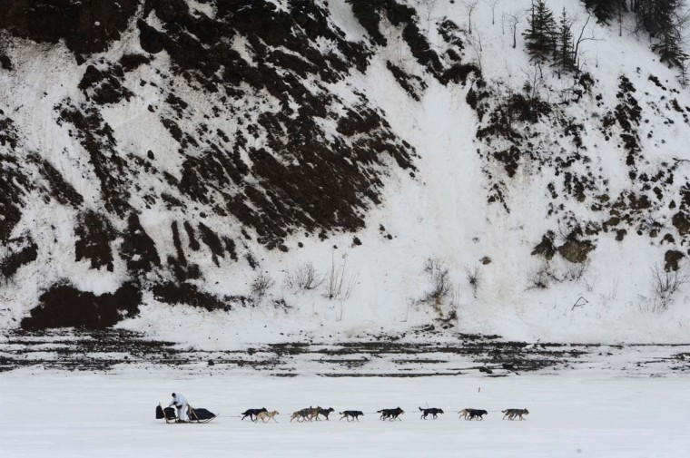Four-time Iditarod champion Martin Buser drives his dog team up the Yukon River after leaving the checkpoint in Anvik, Alaska, on Friday, March 8, 2013. (Bill Roth/Anchorage Daily News/MCT)