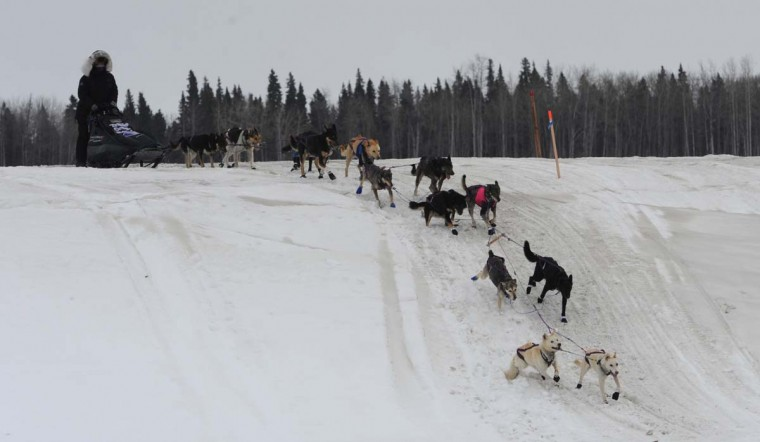 Iditarod musher Jessie Royer drives her team across an island in the Yukon River as she nears the Iditarod checkpoint in Anvik, Alaska, on Friday, March 8, 2013. (Bill Roth/Anchorage Daily News/MCT)
