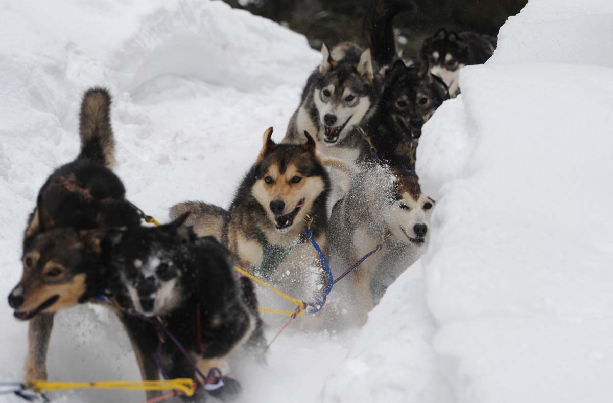 Dogs Names In The Iditarod