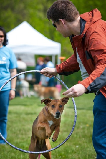 April 21, 2012: Ian Wright, of Columbia, holds a hula hoop for his dog Lilu to jump through during the trick contest. Lilu is a half greyhound, half beagle-dotson mix. The Columbia Association held its annual Dog Day Afternoon event at Hopewell Park, featuring activities, contests, games, and products for Columbia residents and their dogs. (Nate Pesce/Patuxent Publishing)