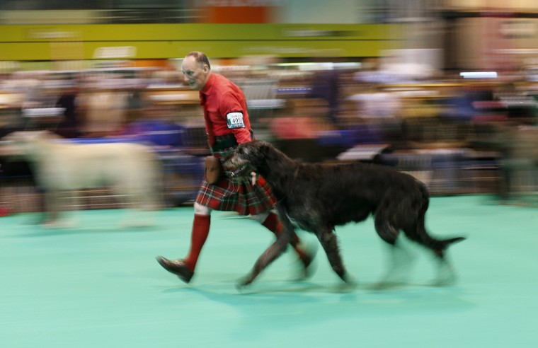 A man wearing a kilt shows an Irish Wolfhound during the first day of the Crufts Dog Show in Birmingham. (Darren Staples/Reuters photo)