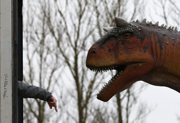 A worker directs the removal of a dinosaur from a lorry at Twycross Zoo near Atherstone, central England. 15 dinosaurs will go on display at Dinosaur Valley, a new attraction at the zoo. (Darren Staples/Reuters)