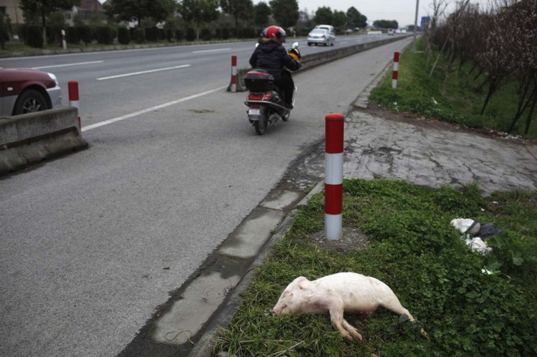 A dead pig lies on a street in Pinghu, Zhejiang province, March 11, 2013. Over 2,200 pigs have been found dead in one of Shanghai's main water sources, official media reported on March 11, 2013, triggering a public outcry in China where concerns over food safety and environmental pollution run high. (Aly Song/Reuters)