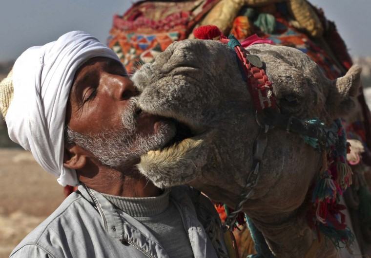 A man kisses his camels in front of tourists at the Giza Pyramids plateau as he awaits for them to take a ride, March 17, 2013. (Asmaa Waguih/Reuters)