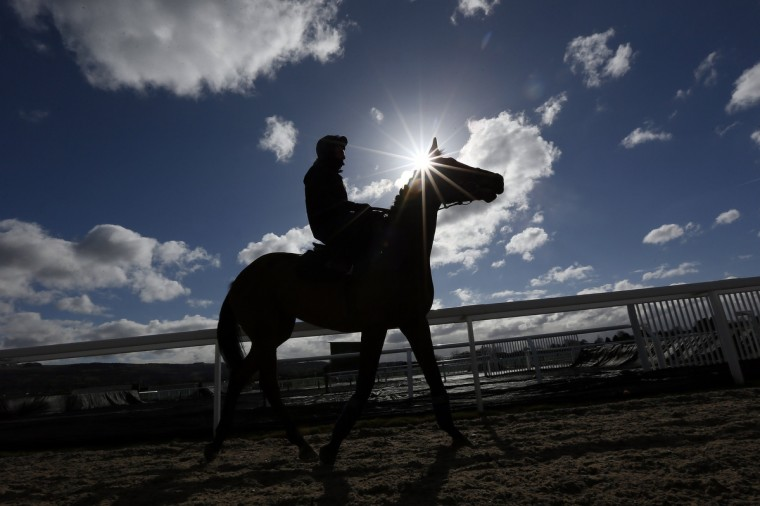 A horse returns from the gallops at the Cheltenham racecourse in western England. (Stefan Wermuth/Reuters)
