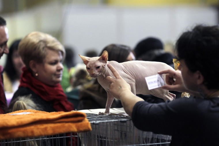 "An owner shows her Canadian Sphynx cat during the international ""Pet Expo"" show in Riga, Latvia. (Ints Kalnins/Reuters)"