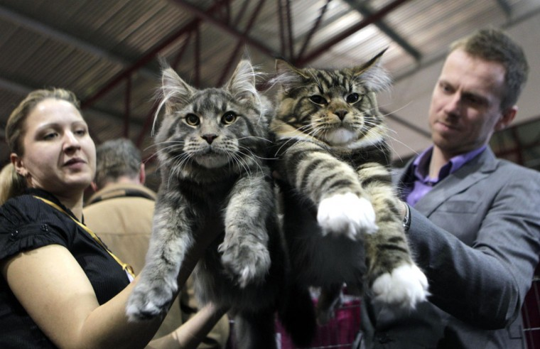 "Ruta (L) and Ivo Obrumanis hold their Maine Coon cats during the international ""Pet Expo"" show in Riga, Latvia. (Ints Kalnins/Reuters)"