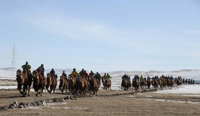Contestants ride camels during a camel race at Tsonjin Boldog of Tov aimag, near the Mongolian capital Ulan Bator, March 10, 2013. (B.Rentsendorj/Reuters)